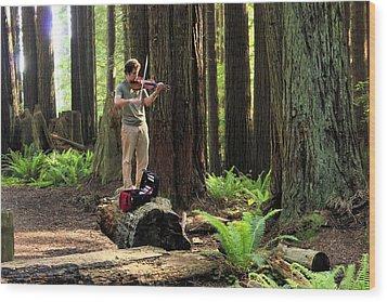 Redwood Symphony   Wood Print