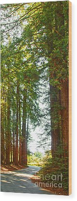 Redwood Wall Mural Panel 2 Wood Print by Artist and Photographer Laura Wrede