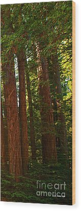 Redwood Wall Mural Panel Three Wood Print by Artist and Photographer Laura Wrede