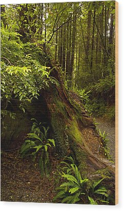Wood Print featuring the photograph Redwoods by Janis Knight