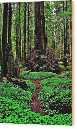 Redwoods Wonderland Wood Print by Benjamin Yeager