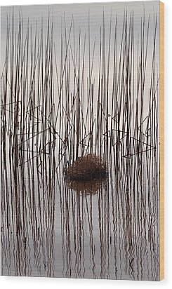 Reed Reflection Wood Print by T C Brown