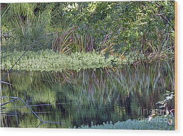 Wood Print featuring the photograph Reed Reflections by Kate Brown