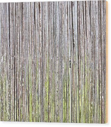 Reeds Background Wood Print by Tom Gowanlock