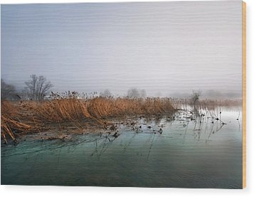 Wood Print featuring the photograph Reeds by Graham Hawcroft pixsellpix