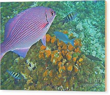 Reef Life Wood Print by John Malone