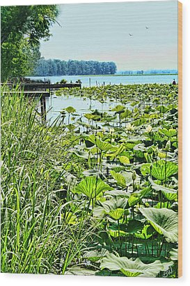 Reelfoot Lake Lilly Pads Wood Print by Bonnie Willis