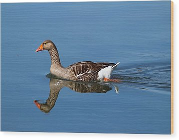 Wood Print featuring the photograph Reflection by Lynn Hopwood
