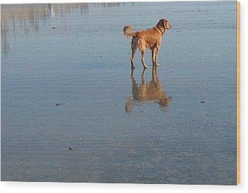 Reflection Of Rusty Wood Print