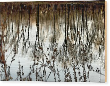 Reflections Wood Print by Joanne Beebe