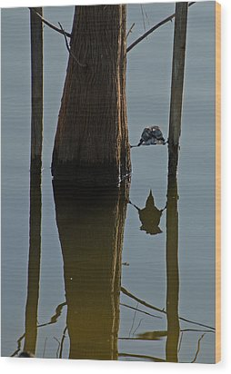 Reflections Wood Print by Julie Cameron