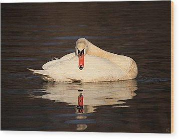 Reflections Of A Swan Wood Print by Karol Livote
