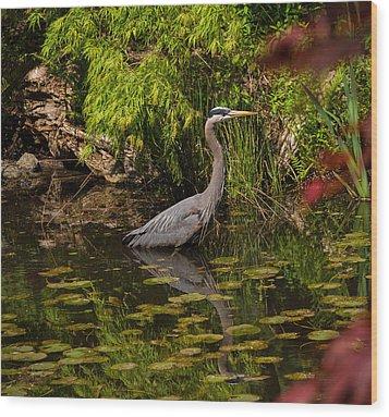 Reflective Great Blue Heron Wood Print by Jordan Blackstone