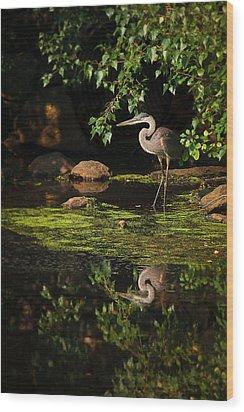 Reflective Heron Wood Print by Sylvia J Zarco