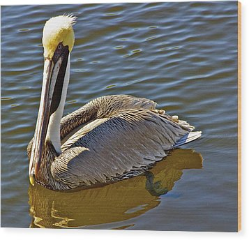 Reflective Pelican Wood Print by Alice Mainville