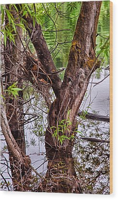 Reflective Trees In A Lake Wood Print by Omaste Witkowski