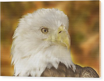 Wood Print featuring the photograph Regal Eagle  by Brian Cross