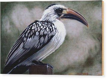 Regal Hornbill Wood Print