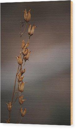#reggiemiller Wood Print by Becky Furgason
