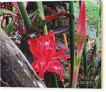Regular Ginger Flower Wood Print by Tina M Wenger