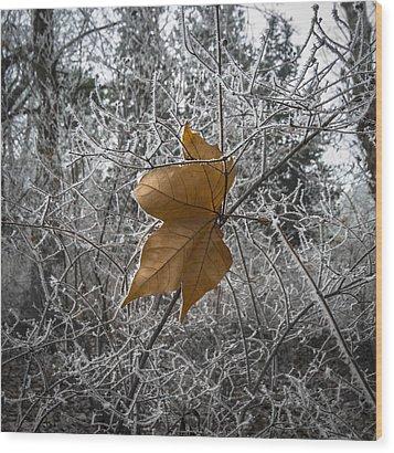 Remained Wood Print by Akos Kozari