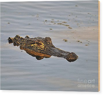 Reptile Reflection Wood Print by Al Powell Photography USA