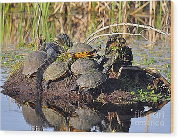 Reptile Refuge Wood Print by Al Powell Photography USA