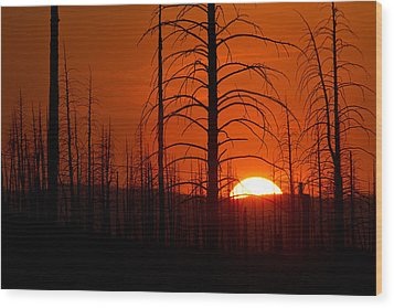 Requiem For A Forest Wood Print by Jim Garrison