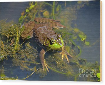 Wood Print featuring the photograph Resting Bronze Frog by Kathy Baccari