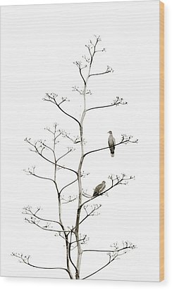 Resting Doves Wood Print by Darla Wood