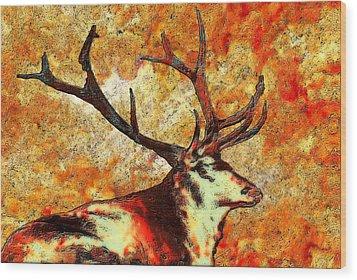 Resting Elk Wood Print by Jack Zulli