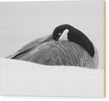 Wood Print featuring the photograph Resting Goose In Bw by Anita Oakley