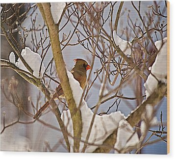 Resting In Snow Wil 324 Wood Print by G L Sarti