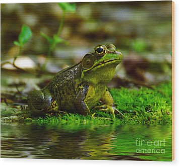 Resting In The Shade Wood Print by Kathy Baccari