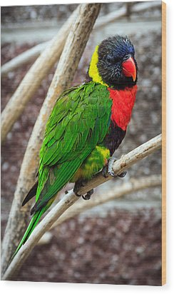Wood Print featuring the photograph Resting Lory by Sennie Pierson
