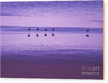 Avocets Resting In The Sunset Wood Print by Michele Penner