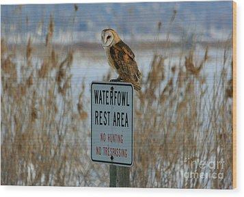 Resting Owl Wood Print by Marty Fancy