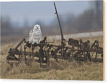 Wood Print featuring the photograph Resting Place by Gary Hall