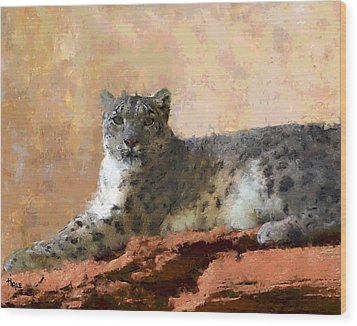 Resting Snow Leopard Wood Print by Roger D Hale