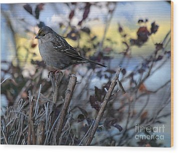 Wood Print featuring the photograph Resting Sparrow by Marjorie Imbeau