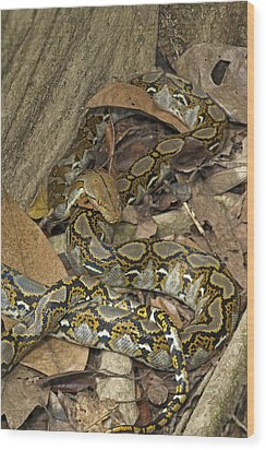 Reticulated Python Wood Print