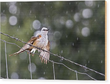 Revelling In The Rain Wood Print