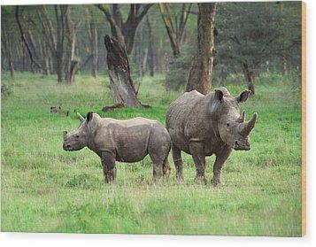 Rhino Family Wood Print by Sebastian Musial
