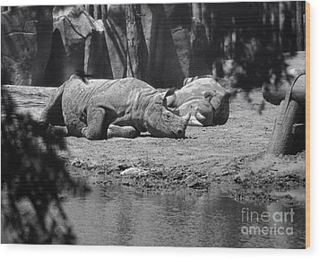 Rhino Nap Time Wood Print by Thomas Woolworth