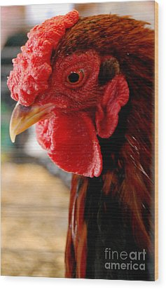 Rhode Island Red Wood Print