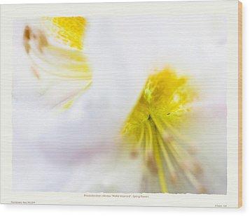 Rhodendron 'walter Maynard' - Spring Flowers Wood Print by Saxon Holt