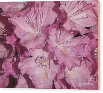 Rhododendron Bliss Wood Print by Sara  Raber