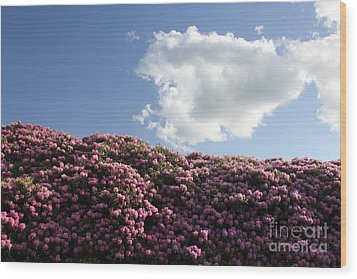 Rhododendron Wood Print by Melissa Petrey