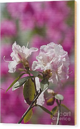 Rhododendron Wood Print by Steven Ralser