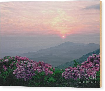 Rhododendron Sunrise Wood Print by Annlynn Ward